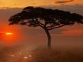 Park Narodowy Serengeti, Tanzania