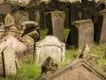 Stary żydowski cmentarz w Pradze